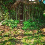 Studio all'aperto nel bosco di bambù, per i trattamenti di riflessologia plantare durante la bella stagione.